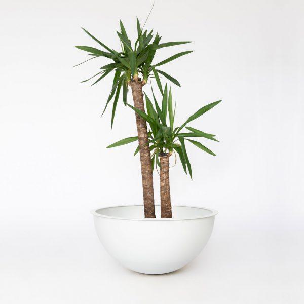 Grijs witte Sunwood NOBL Design Vaas op witte achtergrond met yucca plant