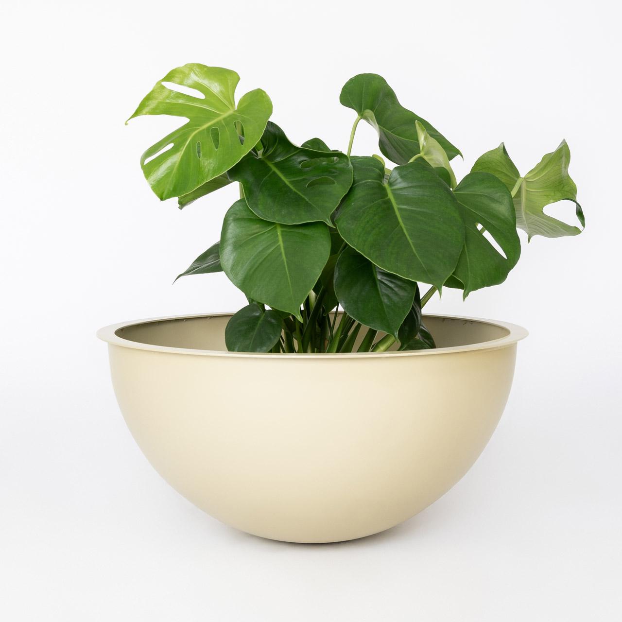 Champagne kleur Sunwood NOBL Design Vaas op witte achtergrond met groene plant
