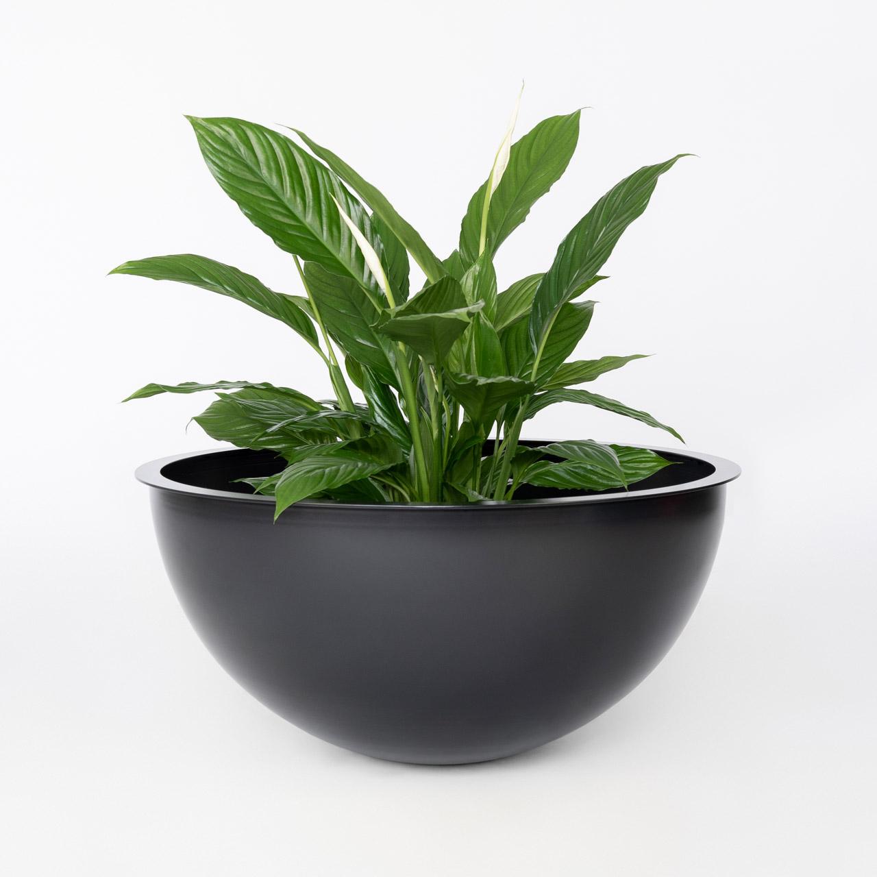 Zwarte Sunwood NOBL Design Vaas op witte achtergrond met groen witte plant