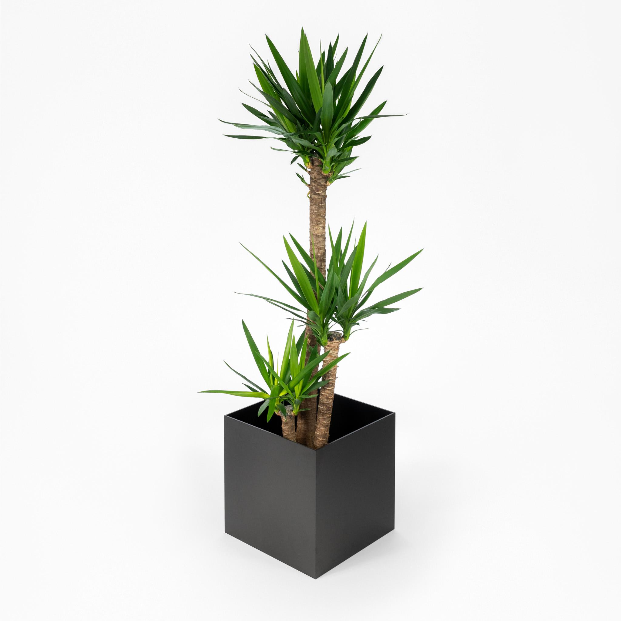 Steelish plantenbak van staal